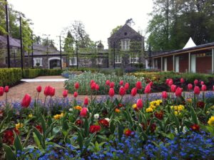 Beautiful blooms at Antrim Castle Garden & Clotworthy House