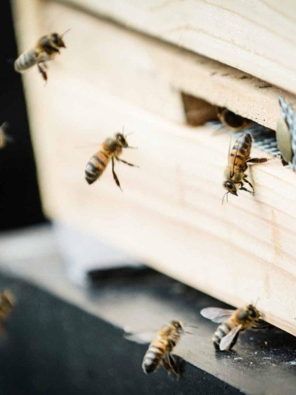 Big Bee Bank