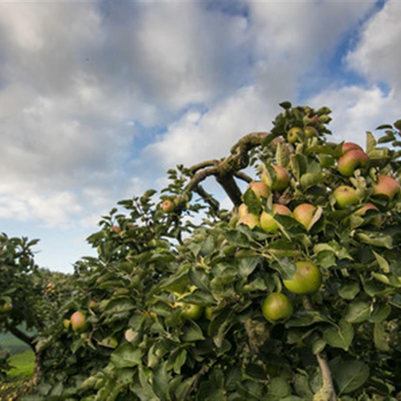 Art in the Orchard - Bill Gatt